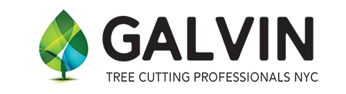galvin tree cutting logo